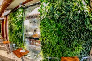 Les végétaux stabilisés de vrais plantes qui durent des années